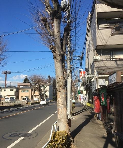 daigakuramen12.jpg