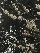nishiogi-ohban2-16.jpg