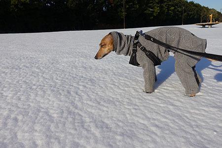 2018大雪