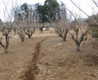 まだ雪の残る養蜂場