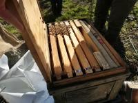 固まって暖を取る蜜蜂