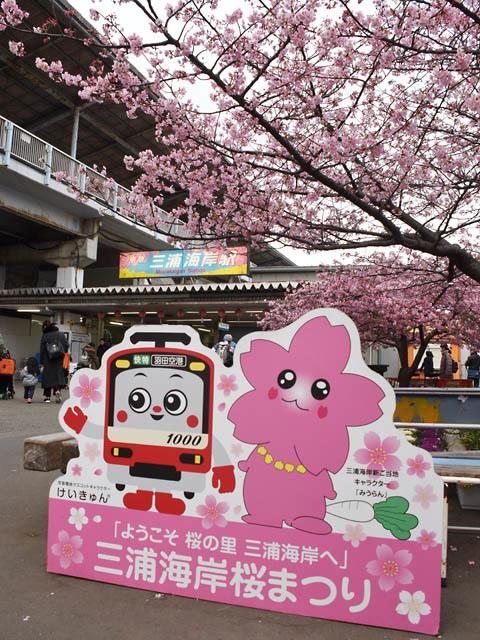 Miura_sakura_180221.jpg