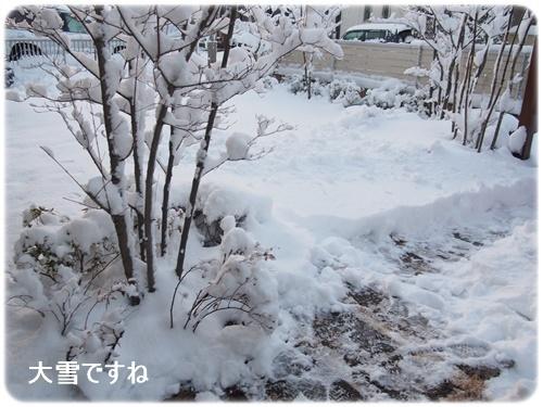 大雪積もった庭
