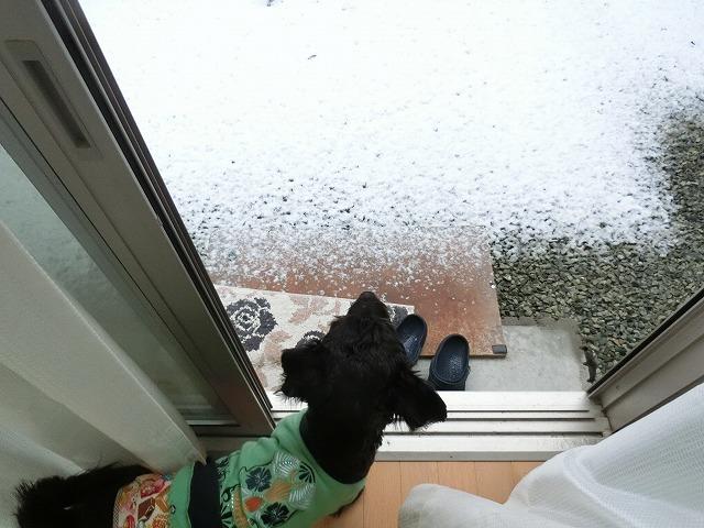 吹雪の一日 002