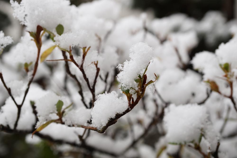 雪積もった木20171218