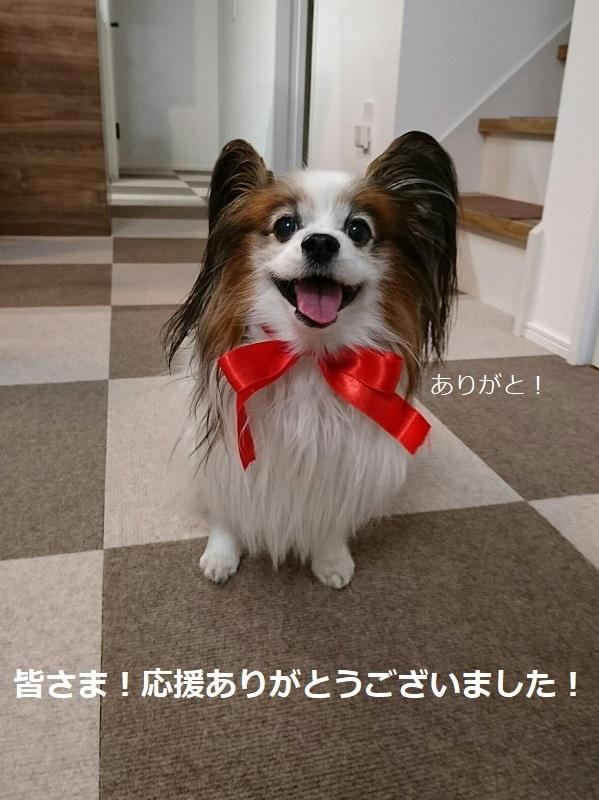 2017123102DSC_0549.jpg
