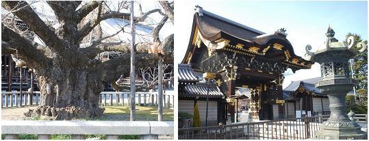西本願寺G