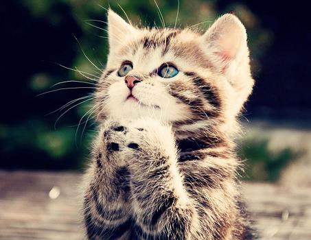 猫  祈る