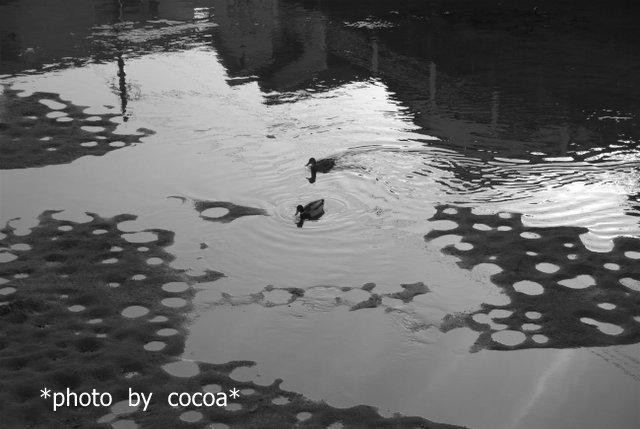 DSC_0012 2012-12-13 15-35-48