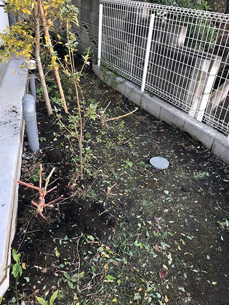 コーポラティブハウス植栽