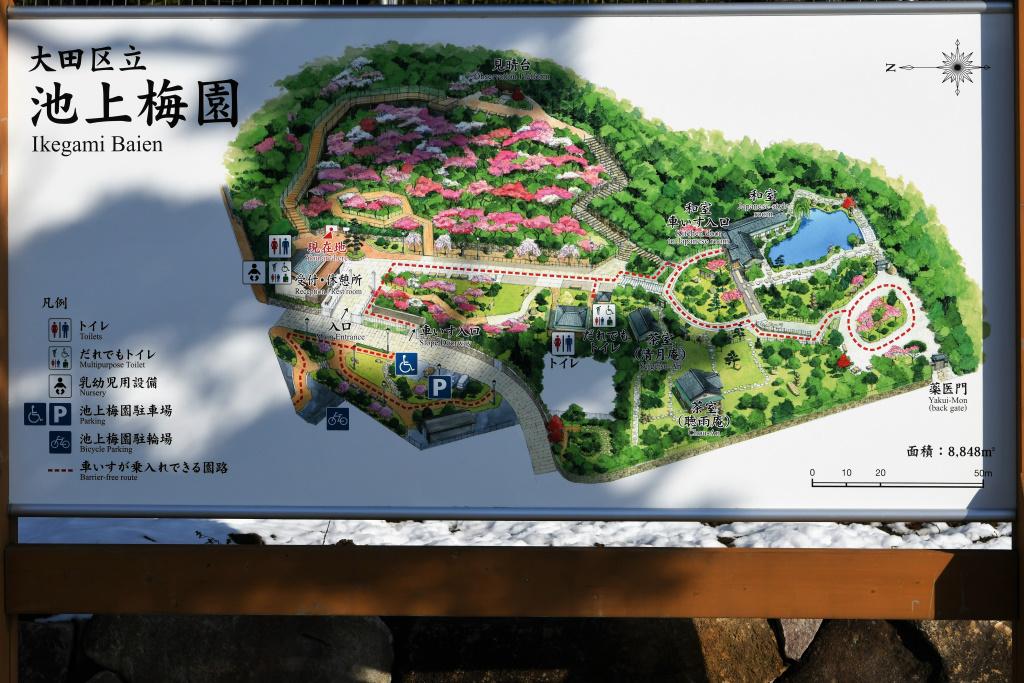 池上梅園 案内図