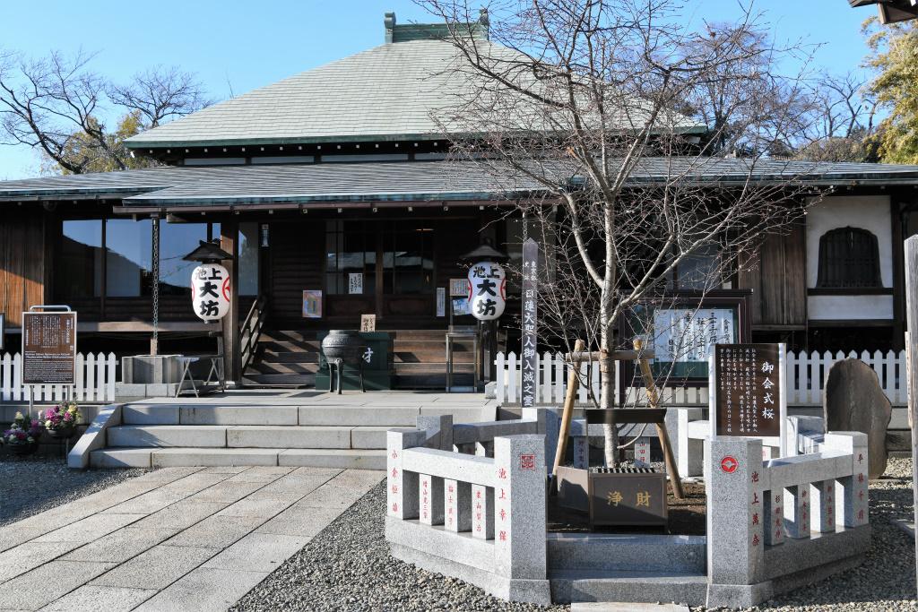御会式桜 1