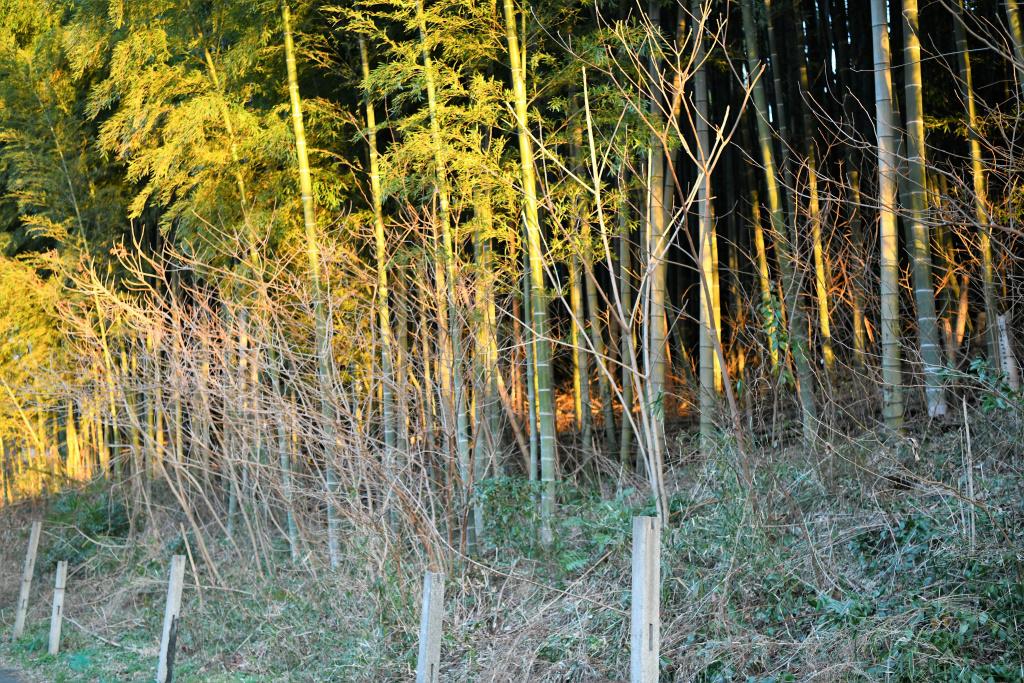 武家屋敷下裏の竹藪