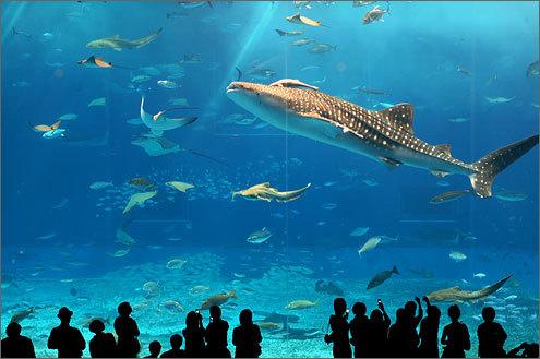 場所 沖縄 美ら海水族館