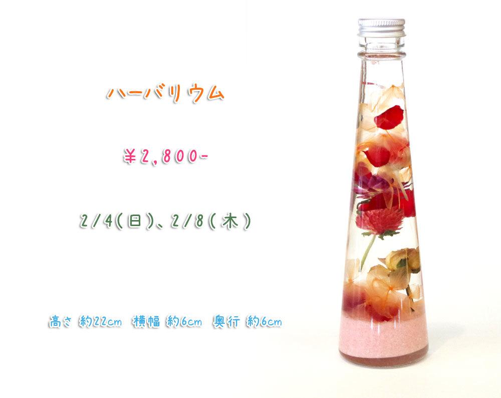 p_flower_201802a.jpg