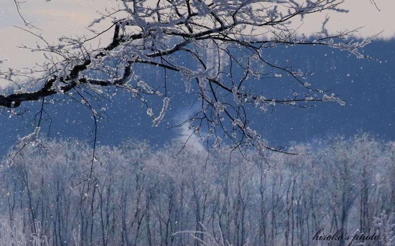 018 樹氷降る0001署名入りedited