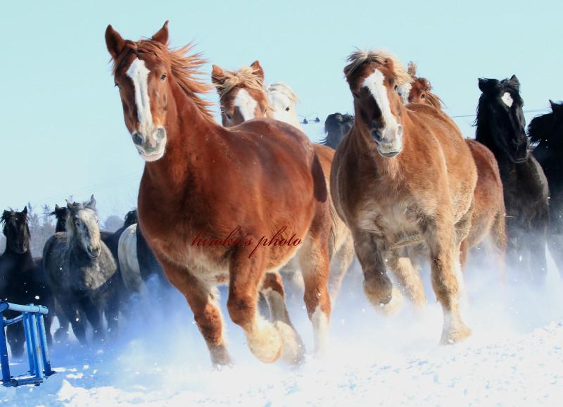 489 馬追い運動0001署名入りedited