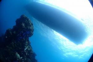 熱海ダイビング冬季限定ポイント洞窟 (5)