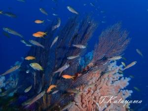 熱海ダイビング (1)