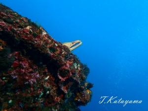 熱海ダイビング (2)