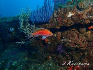 熱海ダイビング (3)