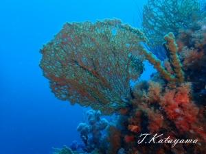 熱海ダイビング (5)