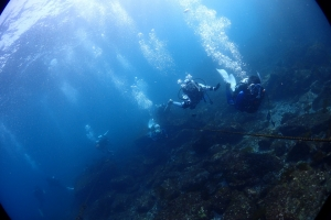 4江の浦ダイビング空を飛ぶ (3)
