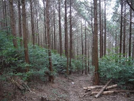 市民の森へ