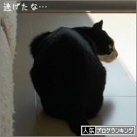dai20180124_banner.jpg