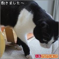 dai20180202_banner.jpg