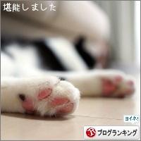 dai20180206_banner.jpg