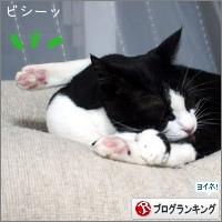 dai20180213_banner.jpg