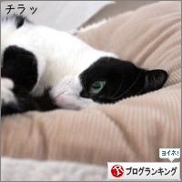 dai20180226_banner.jpg