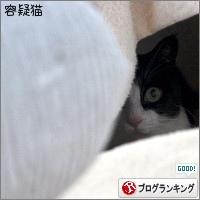 dai20180227_banner.jpg