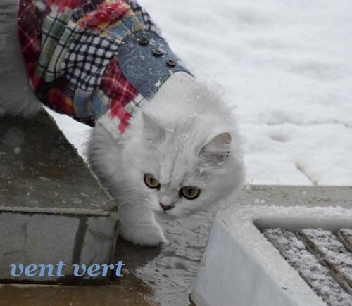 雪です11