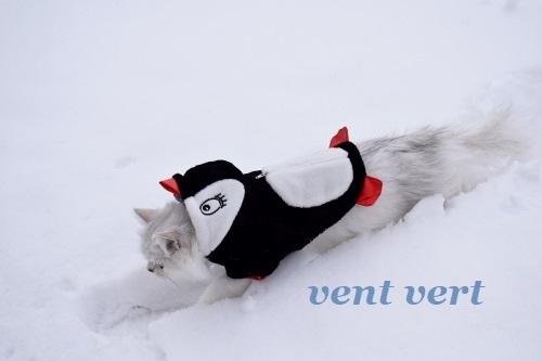 2度目の雪10