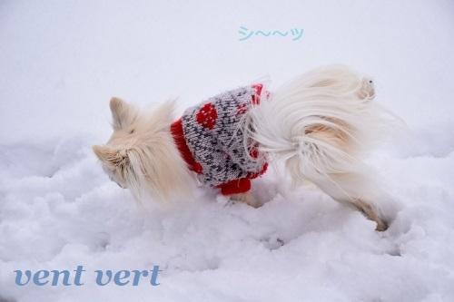 2度目の雪6