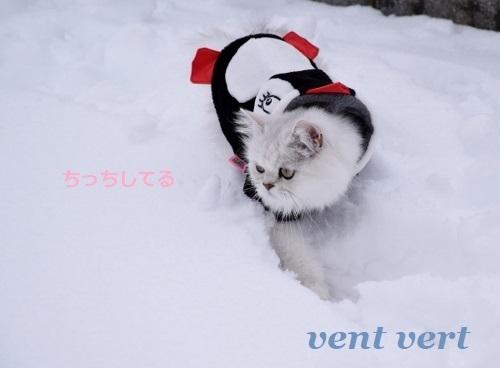 2度目の雪7