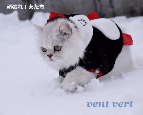2度目の雪8