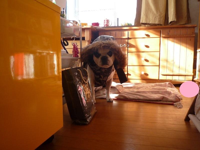 にこら201011to201108 1108
