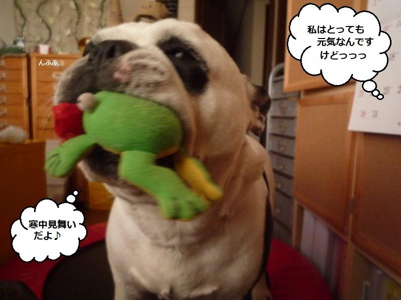 にこら201011to201108 1144