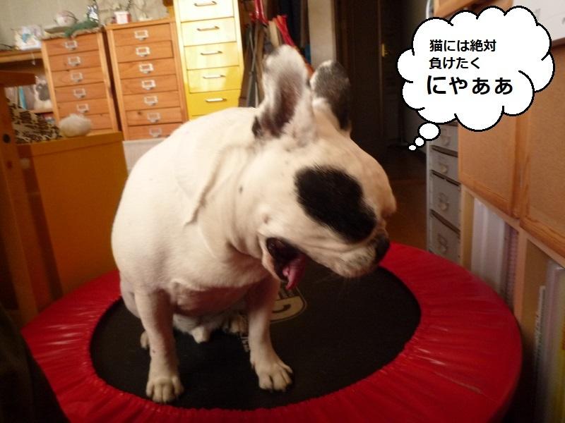 にこら201011to201108 1149