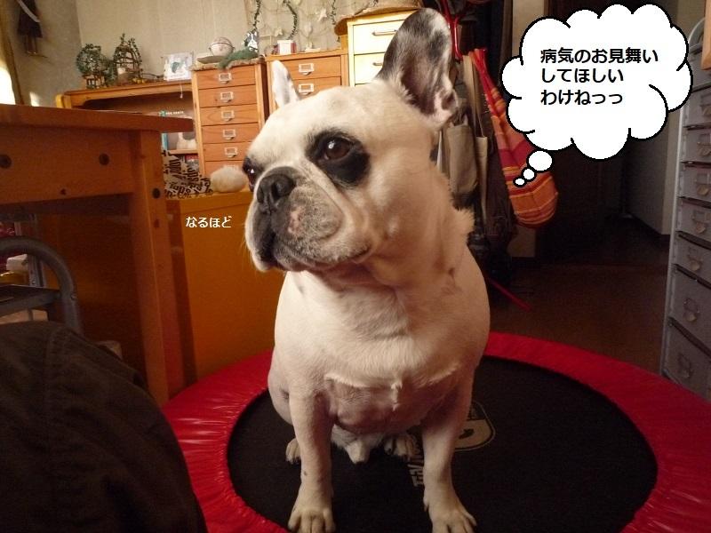 にこら201011to201108 1150