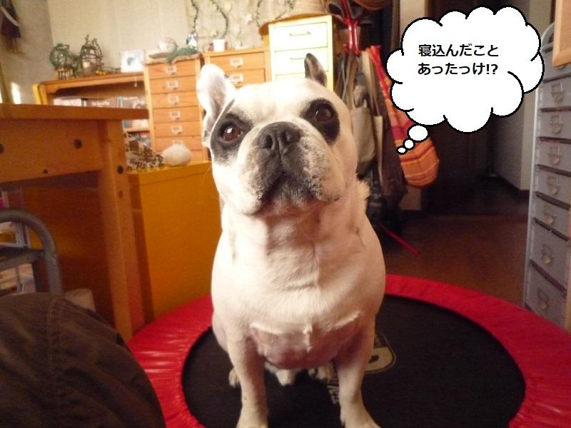にこら201011to201108 1151