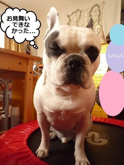 にこら201011to201108 1155