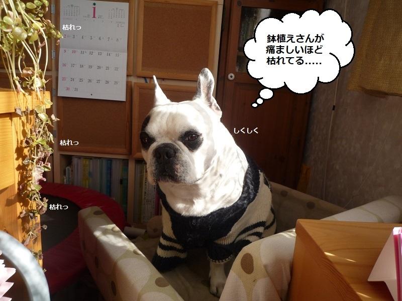 にこら201011to201108 1520