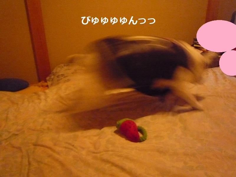 にこら201011to201108 1845