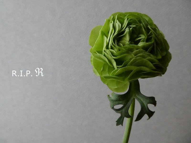P1960646.jpg
