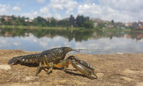 webs180206-crayfish-thumb-554xauto.jpg