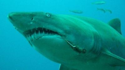 【衝撃!】ヤバっ!サメが!